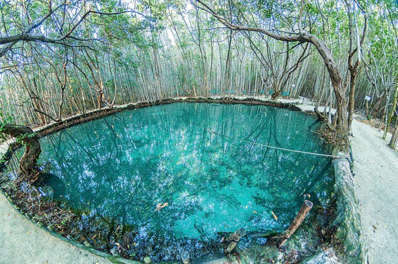 Cenoten in Mexiko wie der Cenote del Corchito bei Mérida sind selten