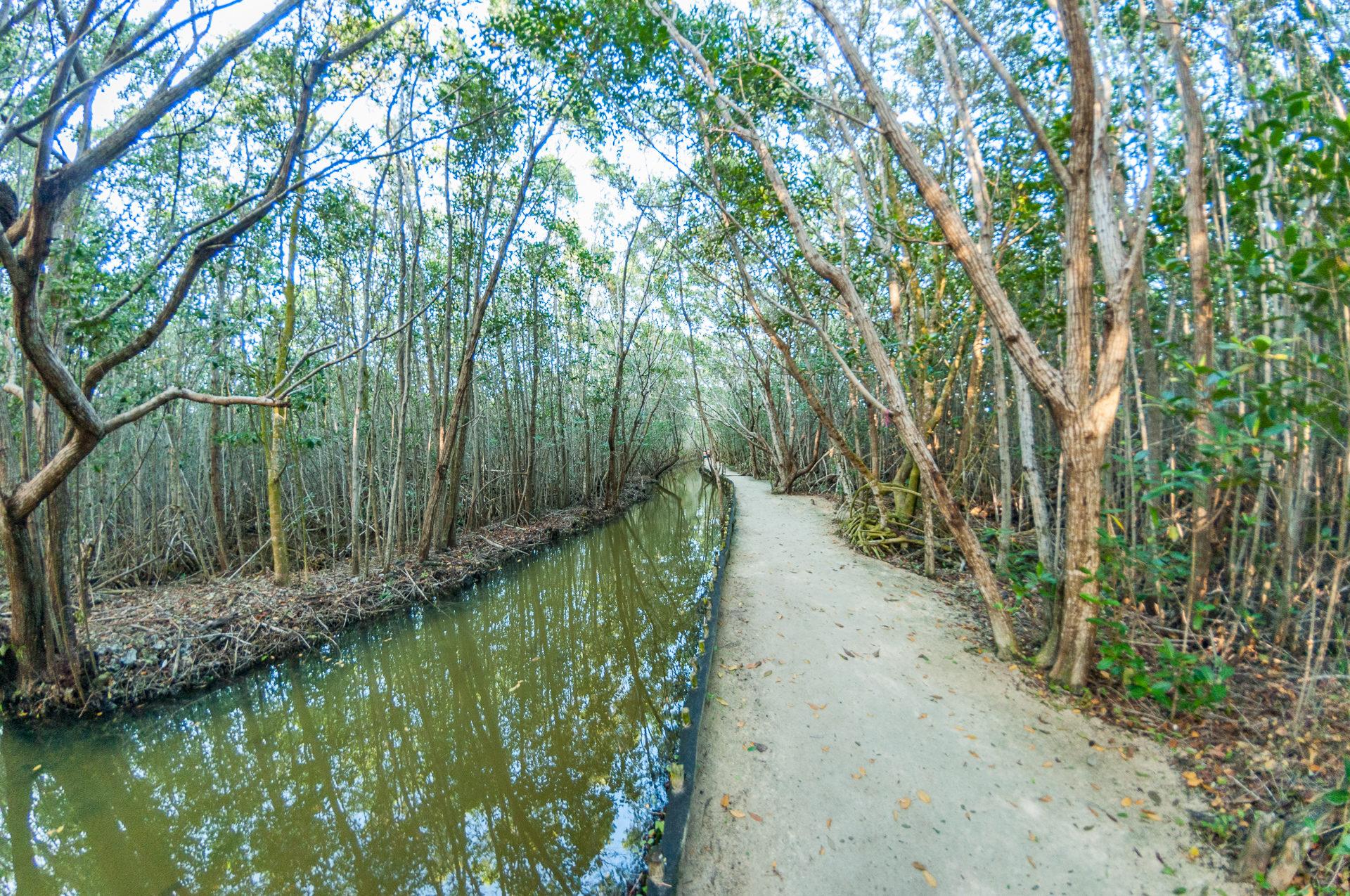 Vielfalt in den Mangroven