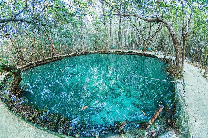 Der kristallklare Cenote del Corchito innerhalb der Reserva Ecológica El Corchito in den Mangroven